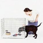 Stap-Voor-Stap Bench training <Br/>(ook voor pup)