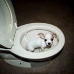 Zindelijk Hond Bench