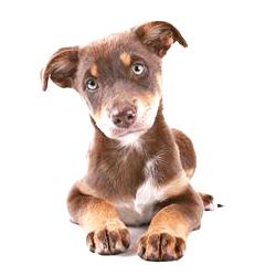 7 redenen waarom hond in bench plast