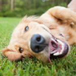 Redenen-Waarom-Hond-In-Bench-Plast